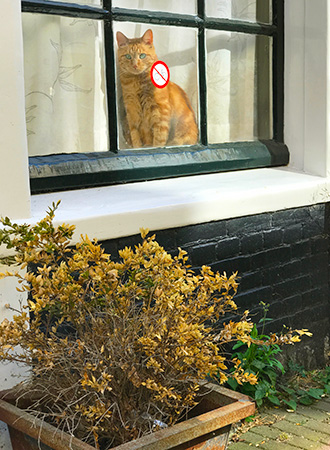 A cat looks through the window in Amsterdam