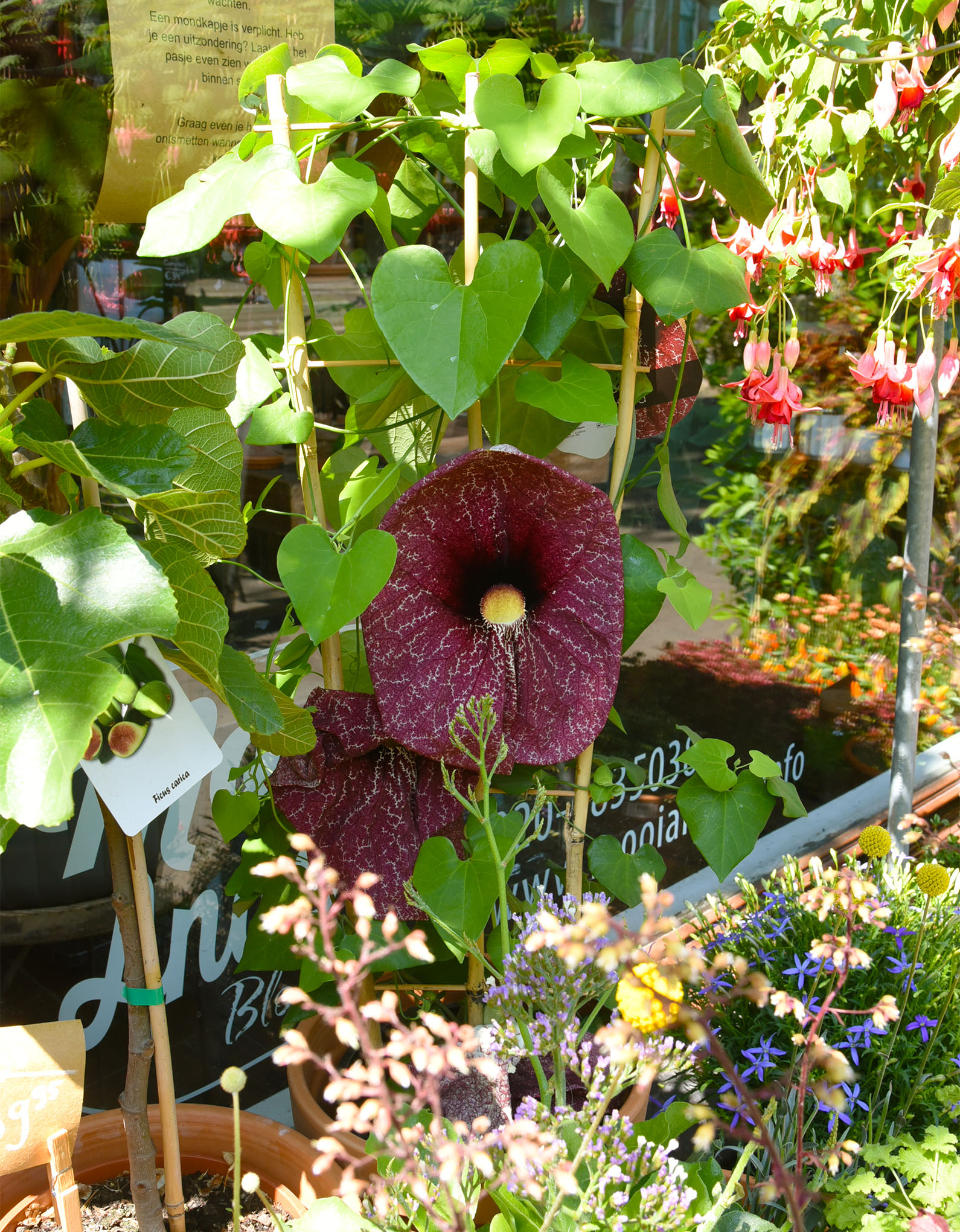 Flower at the window of the flower shop Mooi Anders in Amsterdam