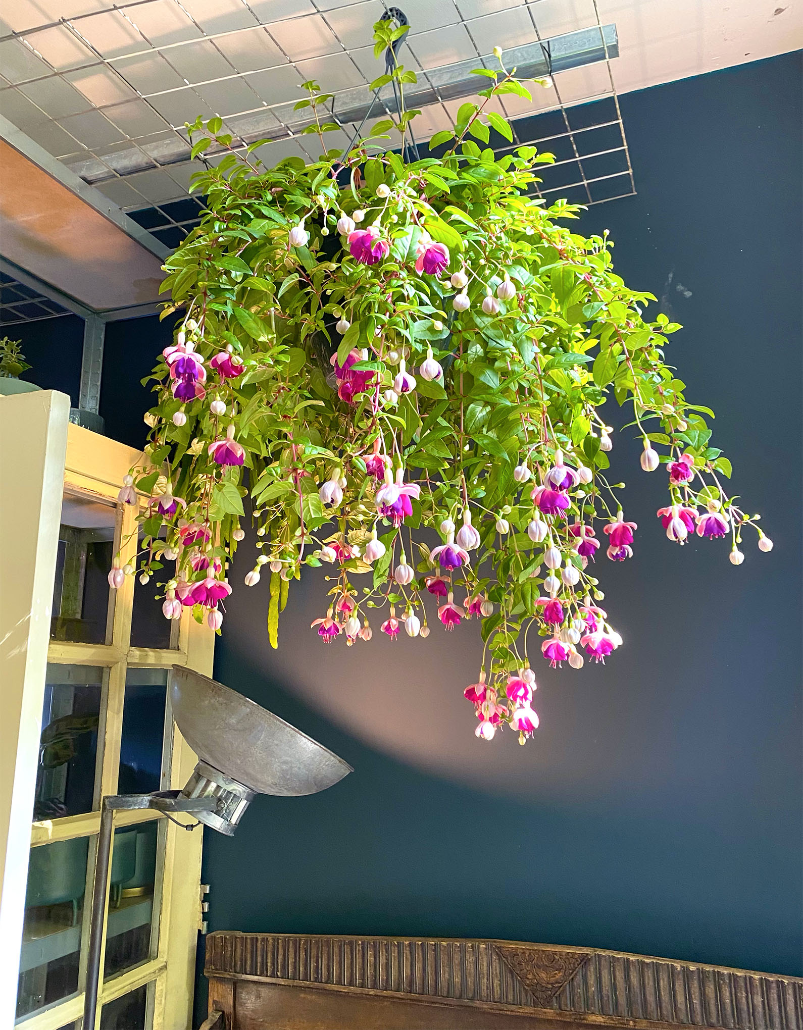 Magnificent hanging flower at the flower shop Mooi Anders in Amsterdam