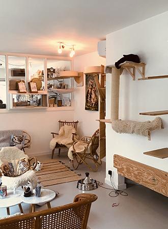 Café e loja com gatos em Amsterdam