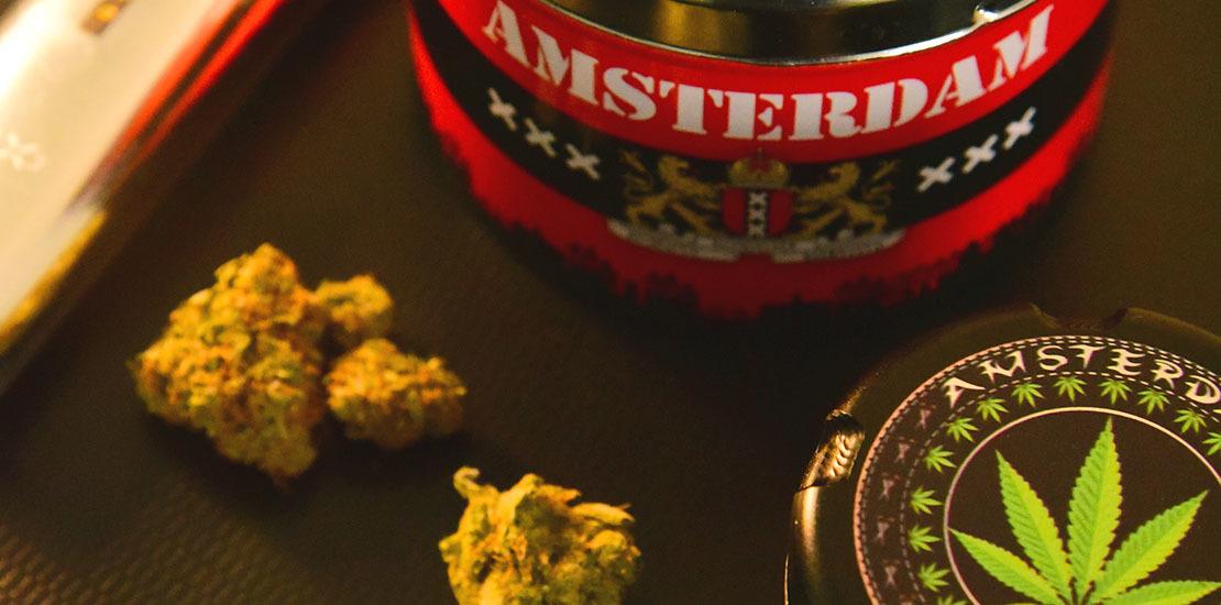 Paraíso da cannabis