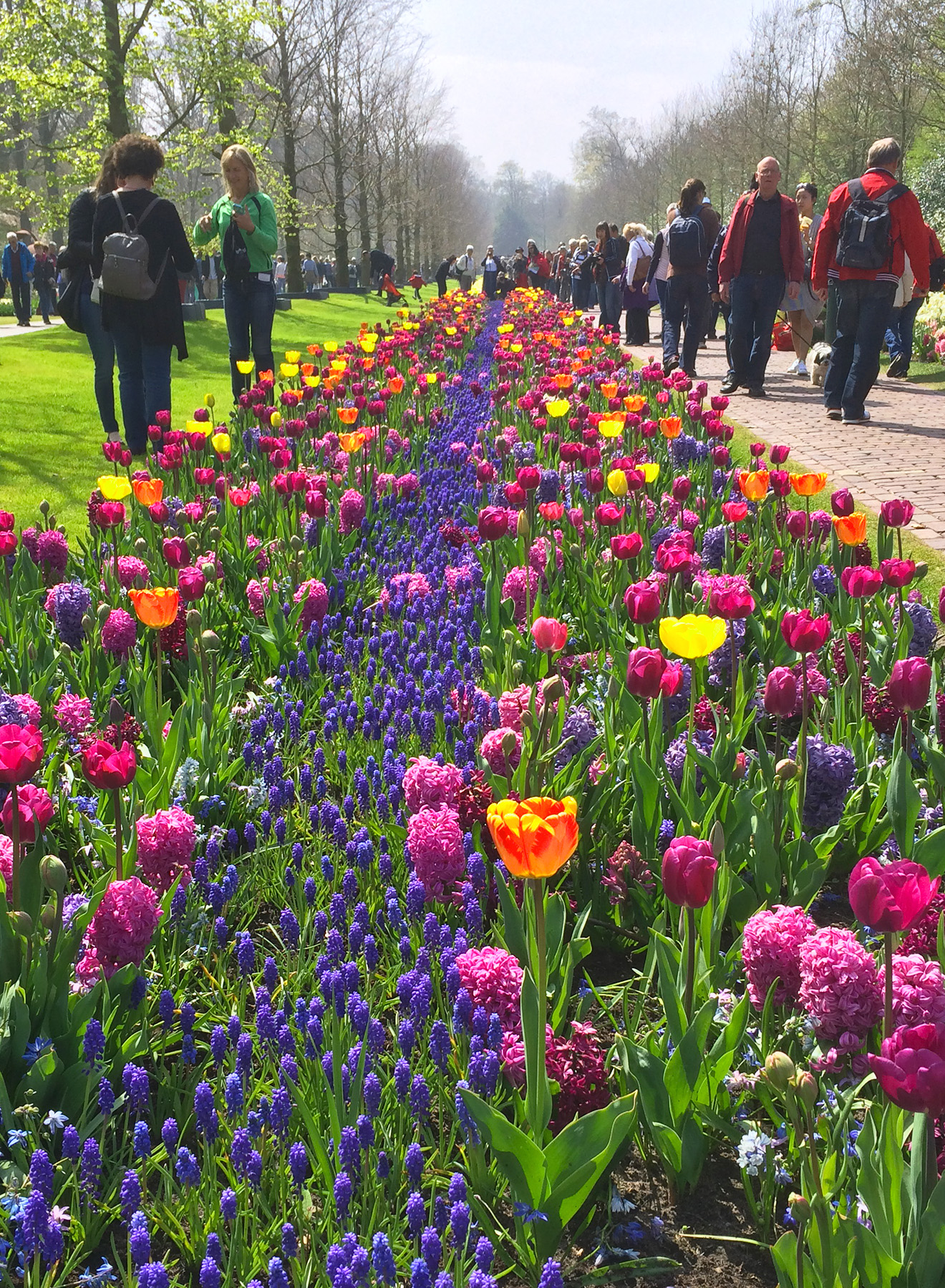 A carpet of flowers and tulips at the park Keukenhof in the Netherlands