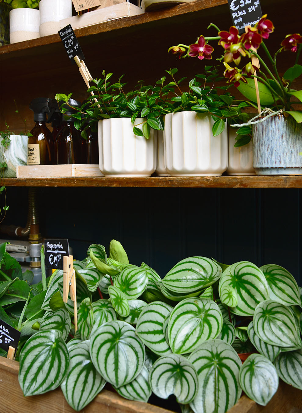 Vases with peperomia at the flower shop Mooi Anders in Amsterdam