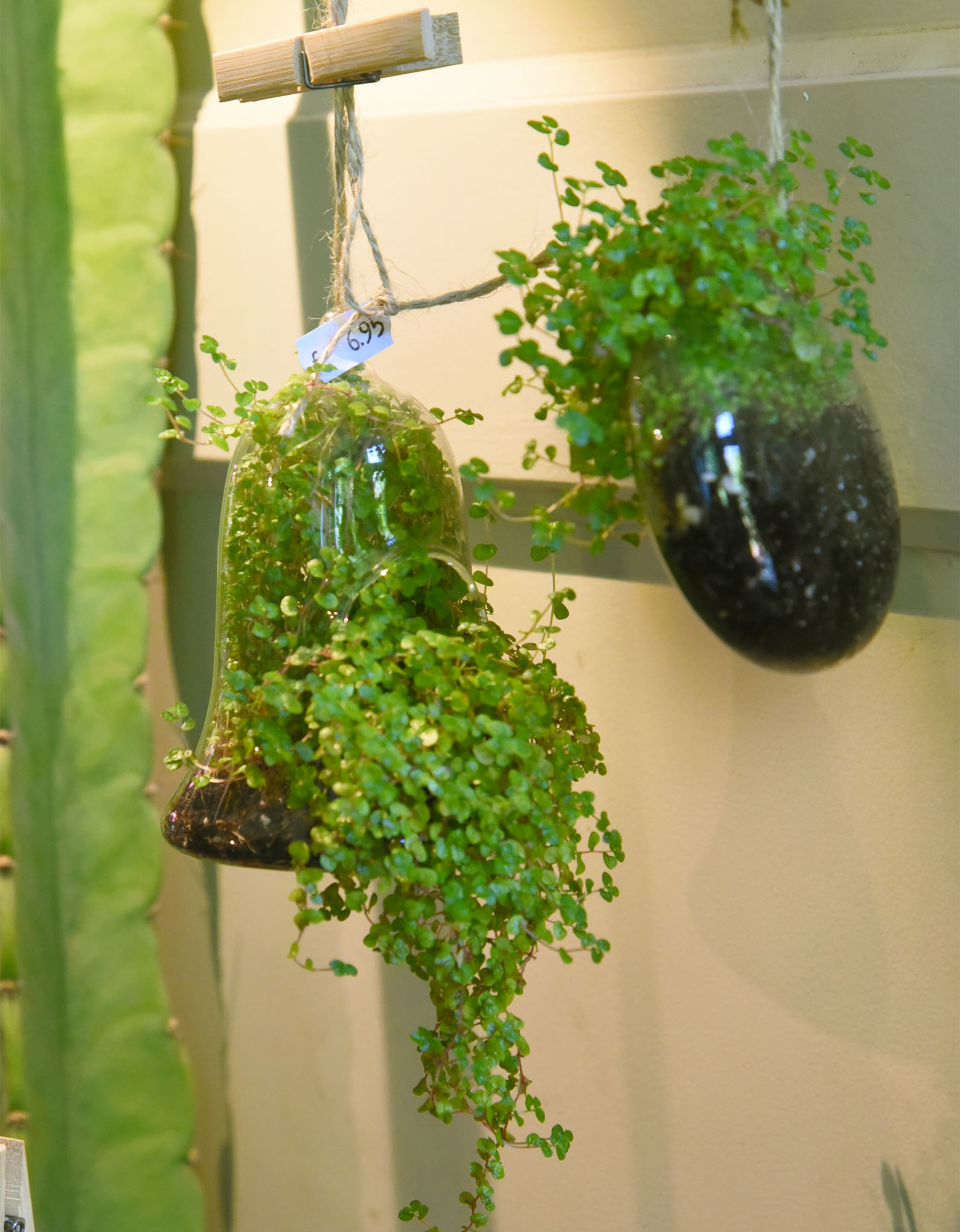 Small hanging flower at the Dutch flower shop Mooi Anders in Amsterdam