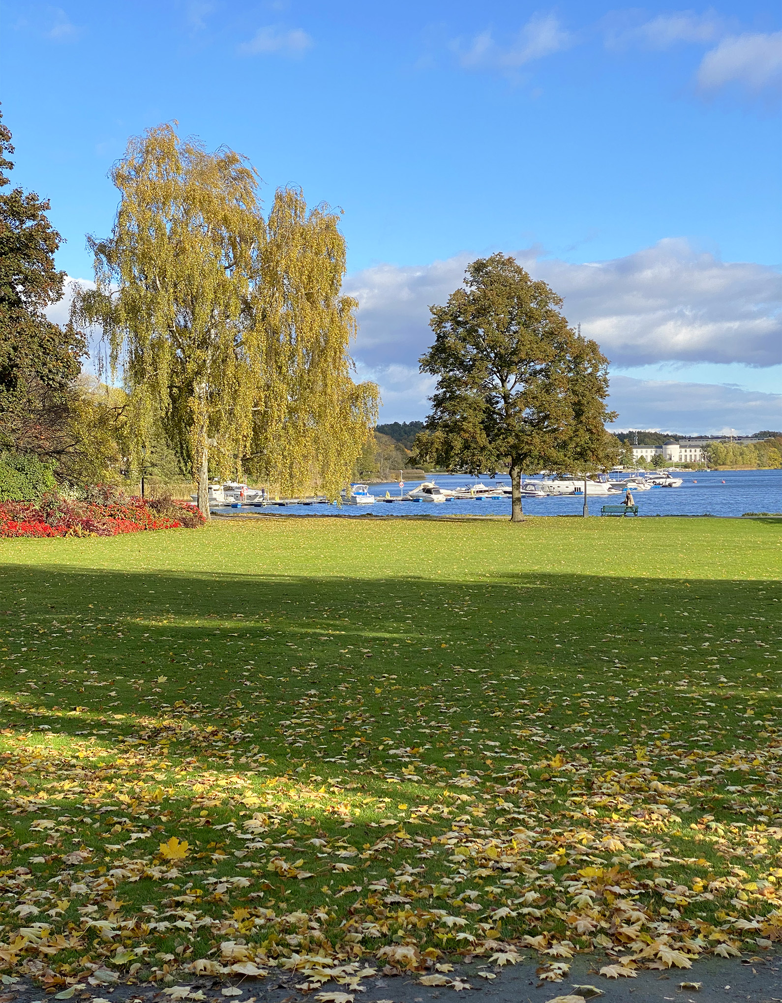 Park and nature in Stockholm during autumn season