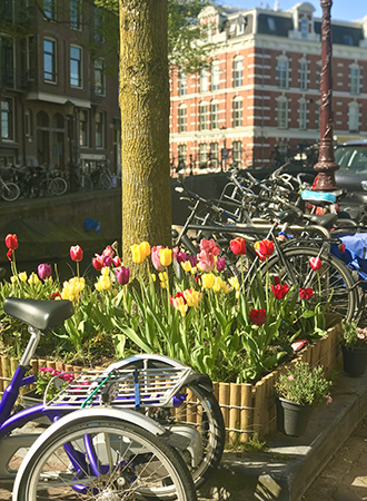 Tulips in Amsterdam during springtime