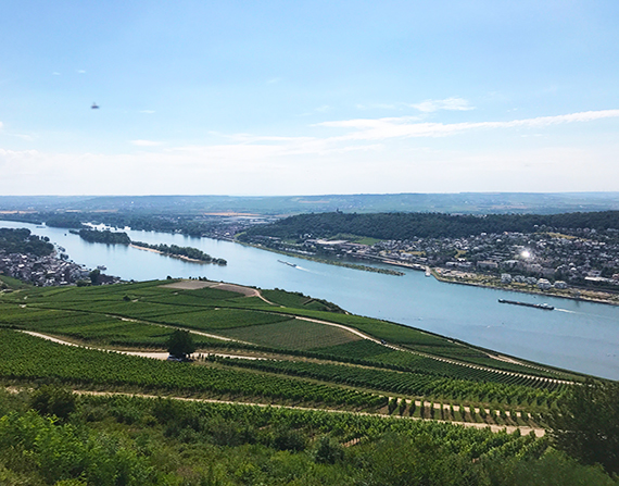 Rheingau wine in Germany